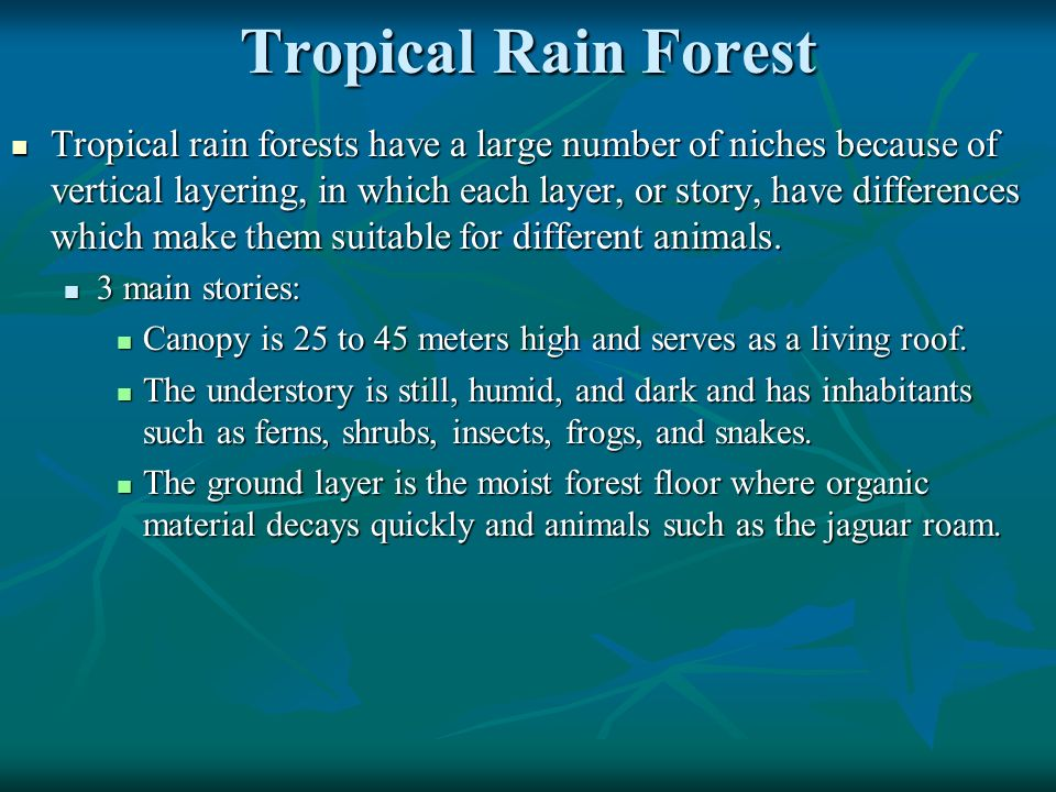 Tropical Rain Forest Tropical rain forests have a large number of niches because of vertical layering, in which each layer, or story, have differences