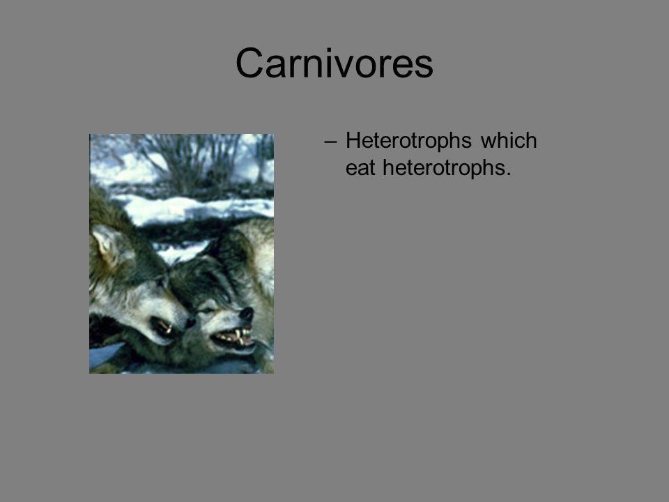 Carnivores –Heterotrophs which eat heterotrophs.