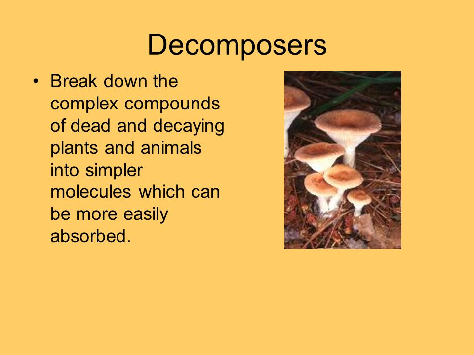 Decomposers Break down the complex compounds of dead and decaying plants and animals into simpler molecules which can be more easily absorbed.
