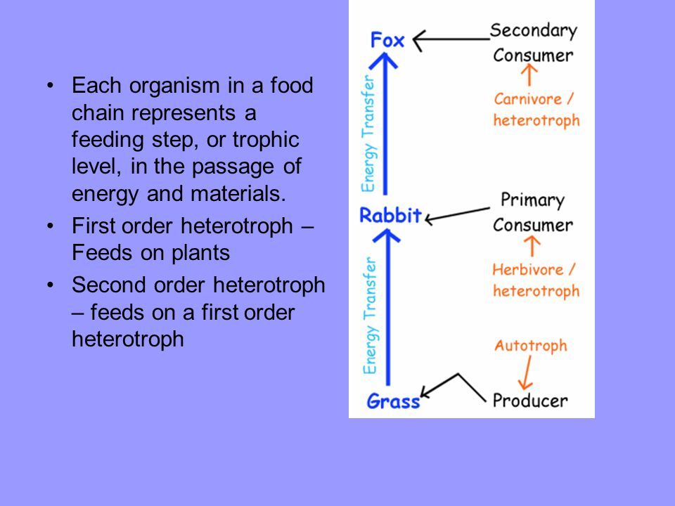 Each organism in a food chain represents a feeding step, or trophic level, in the passage of energy and materials. First order heterotroph – Feeds on