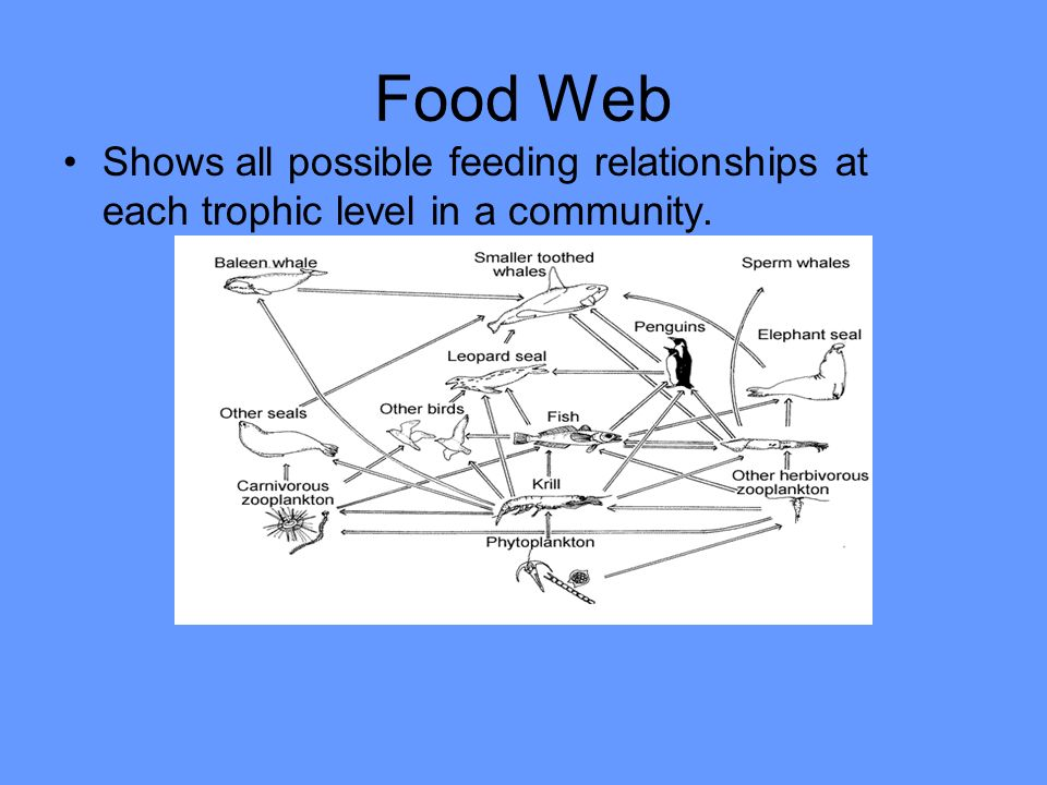 Food Web Shows all possible feeding relationships at each trophic level in a community.