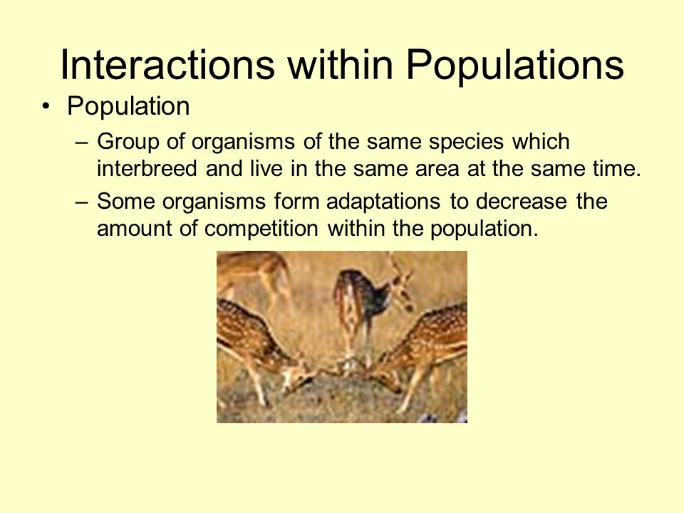 Interactions within Populations Population –Group of organisms of the same species which interbreed and live in the same area at the same time. –Some