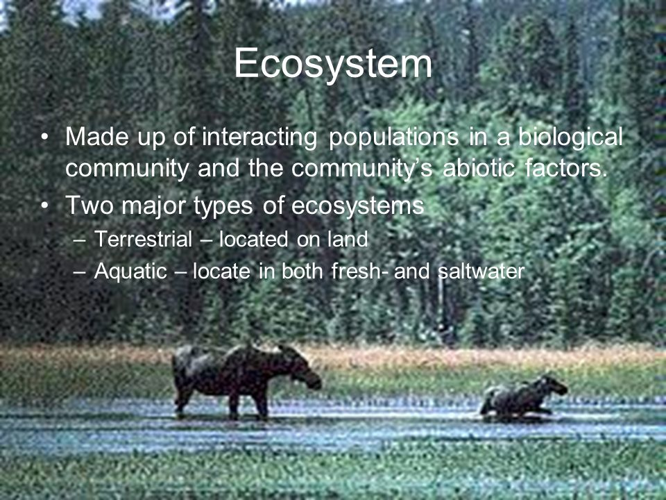 Ecosystem Made up of interacting populations in a biological community and the communitys abiotic factors. Two major types of ecosystems –Terrestrial