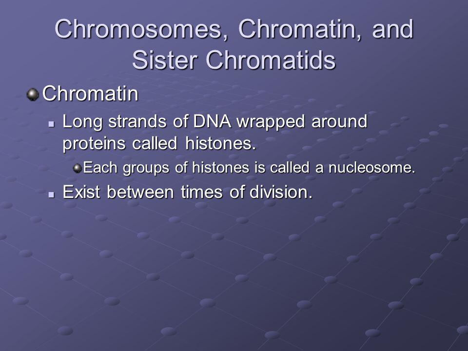 Chromosomes, Chromatin, and Sister Chromatids Chromatin Long strands of DNA wrapped around proteins called histones. Long strands of DNA wrapped aroun