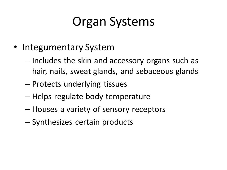 Organ Systems Integumentary System – Includes the skin and accessory organs such as hair, nails, sweat glands, and sebaceous glands – Protects underly