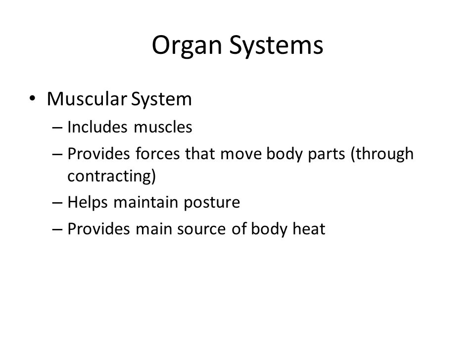 Organ Systems Muscular System – Includes muscles – Provides forces that move body parts (through contracting) – Helps maintain posture – Provides main