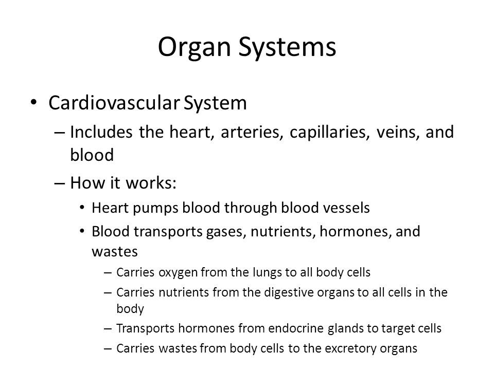 Organ Systems Cardiovascular System – Includes the heart, arteries, capillaries, veins, and blood – How it works: Heart pumps blood through blood vess