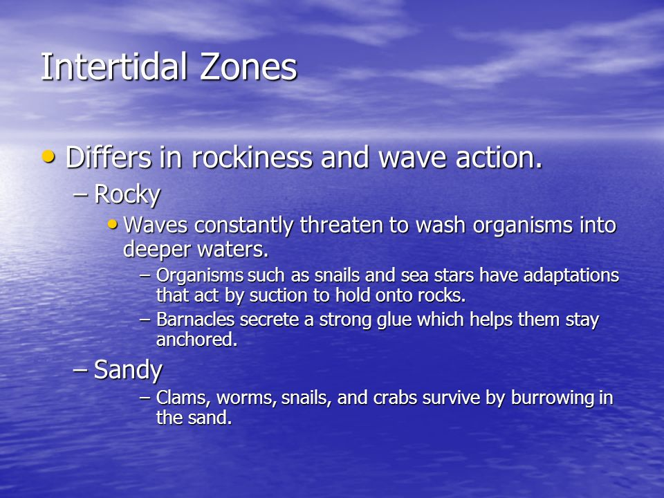 Intertidal Zones Differs in rockiness and wave action. Differs in rockiness and wave action. –Rocky Waves constantly threaten to wash organisms into d