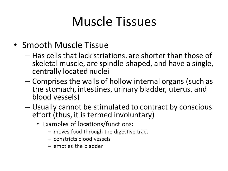 Muscle Tissues Smooth Muscle Tissue – Has cells that lack striations, are shorter than those of skeletal muscle, are spindle-shaped, and have a single