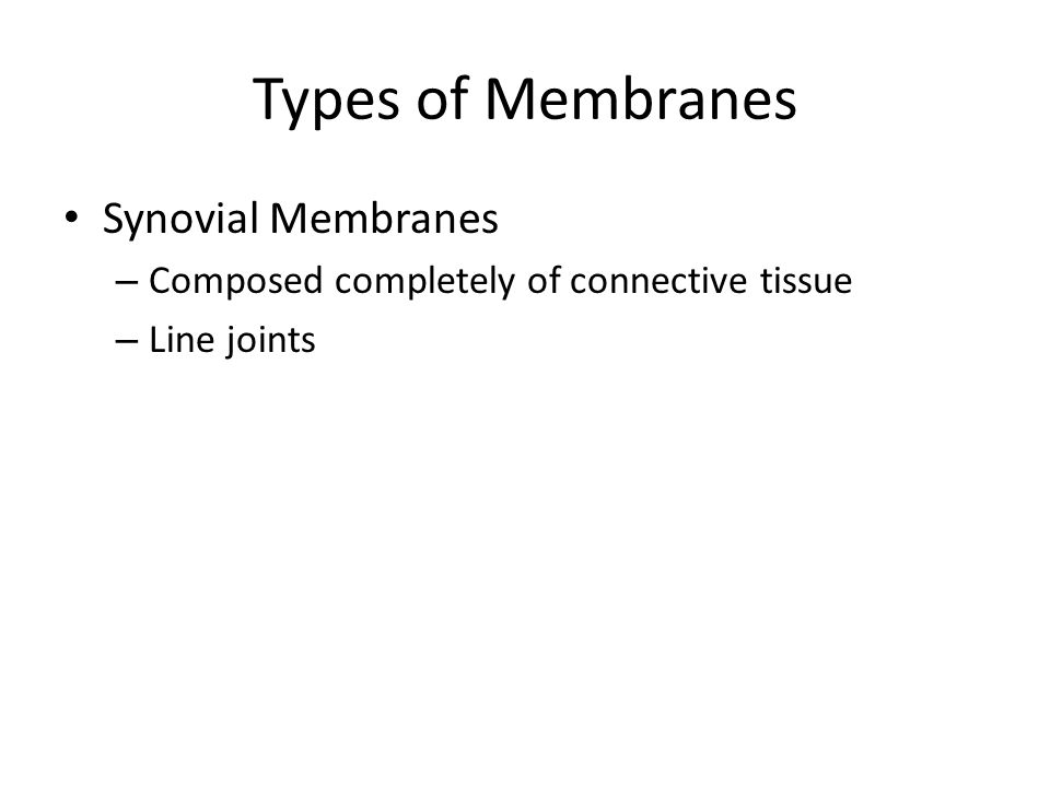 Types of Membranes Synovial Membranes – Composed completely of connective tissue – Line joints