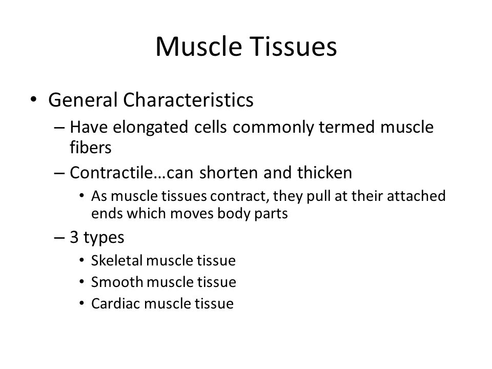 Muscle Tissues General Characteristics – Have elongated cells commonly termed muscle fibers – Contractile…can shorten and thicken As muscle tissues co