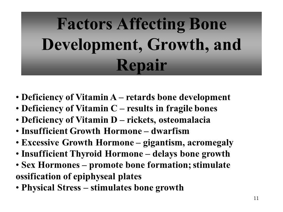 11 Factors Affecting Bone Development, Growth, and Repair Deficiency of Vitamin A – retards bone development Deficiency of Vitamin C – results in frag