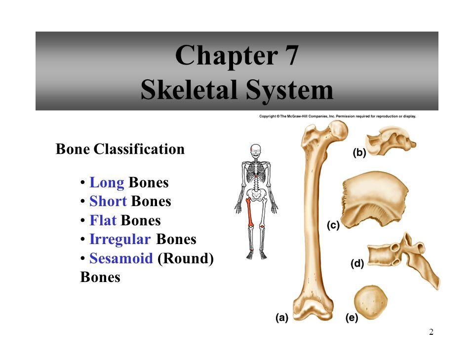 2 Chapter 7 Skeletal System Bone Classification Long Bones Short Bones Flat Bones Irregular Bones Sesamoid (Round) Bones