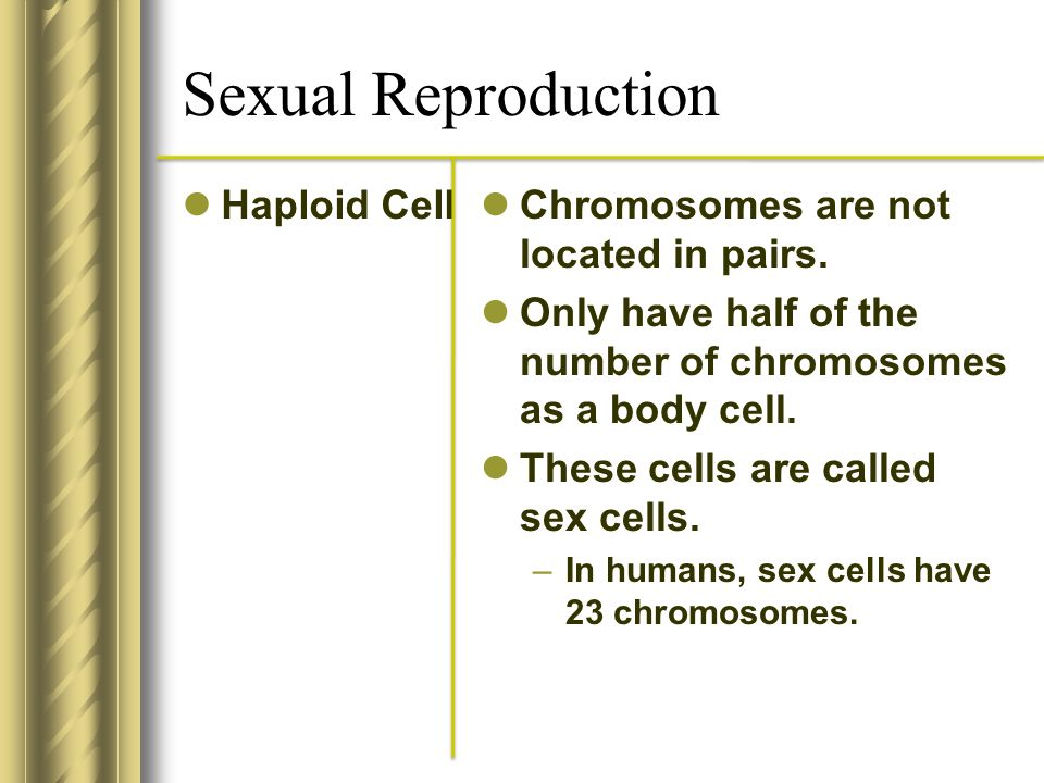 Sexual Reproduction Haploid Cell Chromosomes are not located in pairs. Only have half of the number of chromosomes as a body cell. These cells are cal