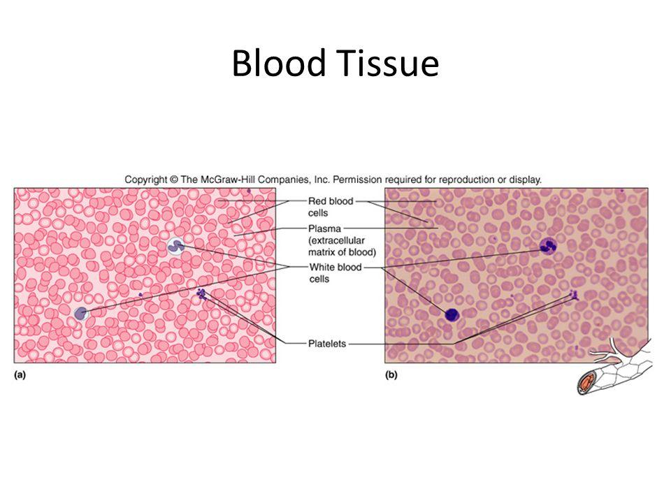 Blood Tissue