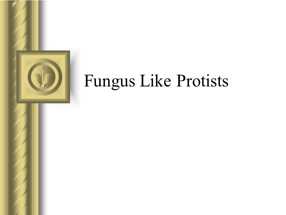 Fungus Like Protists