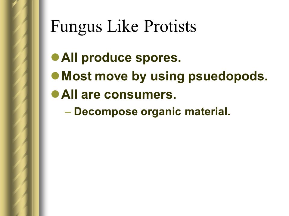 All produce spores. Most move by using psuedopods. All are consumers. –Decompose organic material.