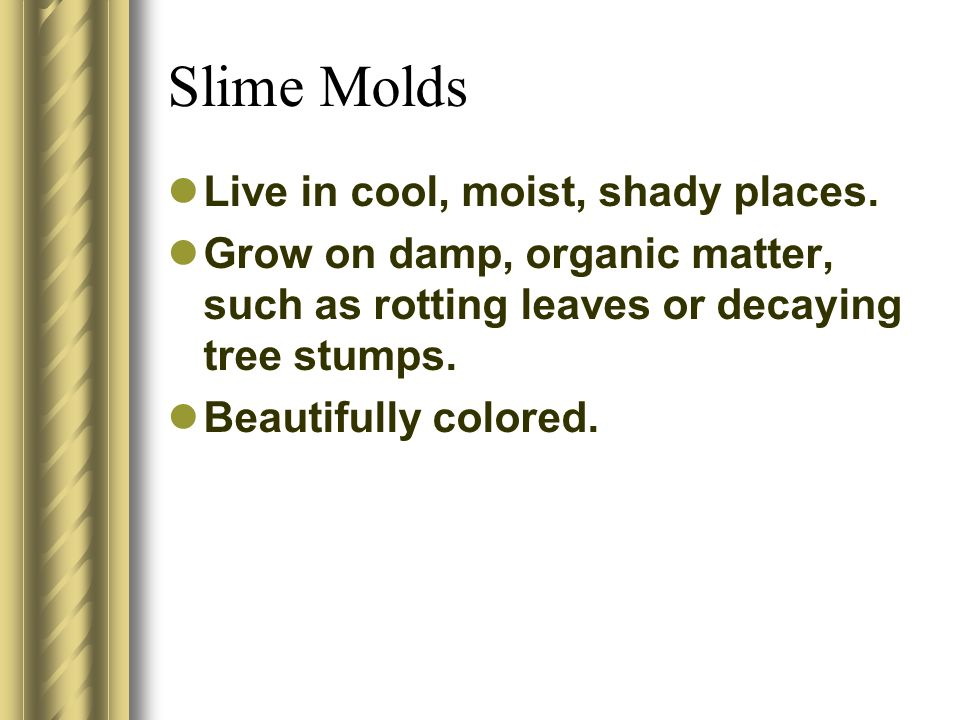 Slime Molds Live in cool, moist, shady places. Grow on damp, organic matter, such as rotting leaves or decaying tree stumps. Beautifully colored.