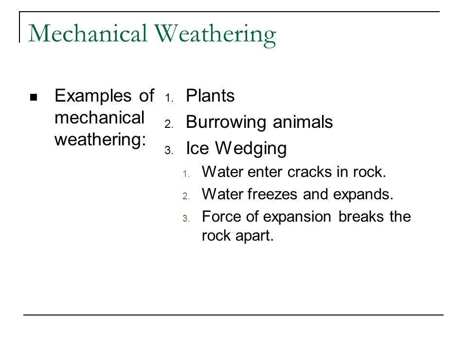 Mechanical Weathering Examples of mechanical weathering: 1. Plants 2. Burrowing animals 3. Ice Wedging 1. Water enter cracks in rock. 2. Water freezes