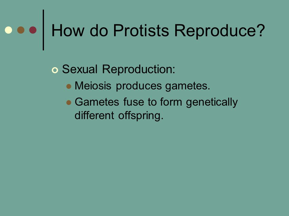 How do Protists Reproduce? Sexual Reproduction: Meiosis produces gametes. Gametes fuse to form genetically different offspring.