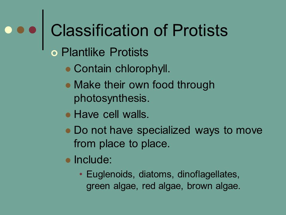 Classification of Protists Plantlike Protists Contain chlorophyll. Make their own food through photosynthesis. Have cell walls. Do not have specialize