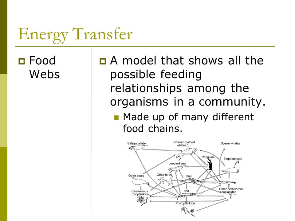 Energy Transfer Food Webs A model that shows all the possible feeding relationships among the organisms in a community. Made up of many different food