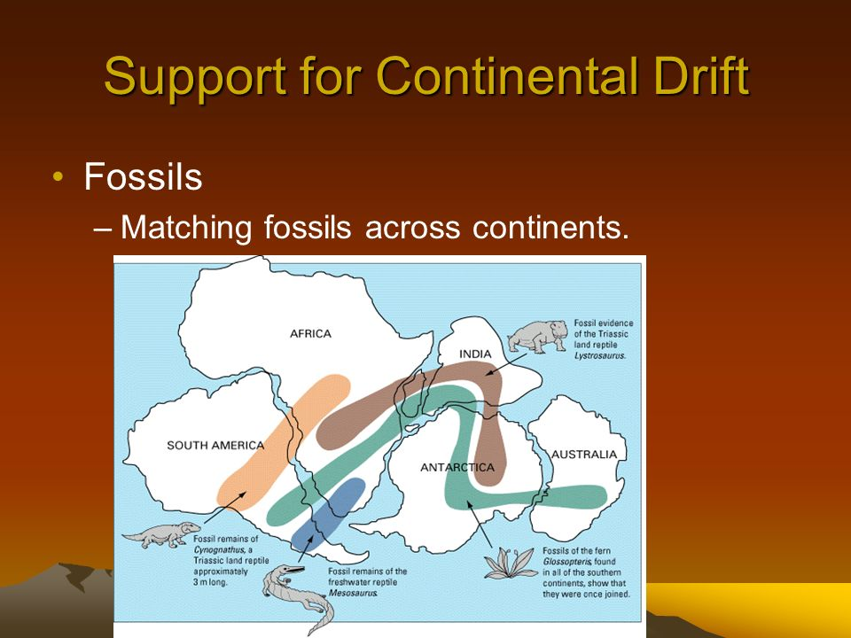 Support for Continental Drift Fossils –Matching fossils across continents.
