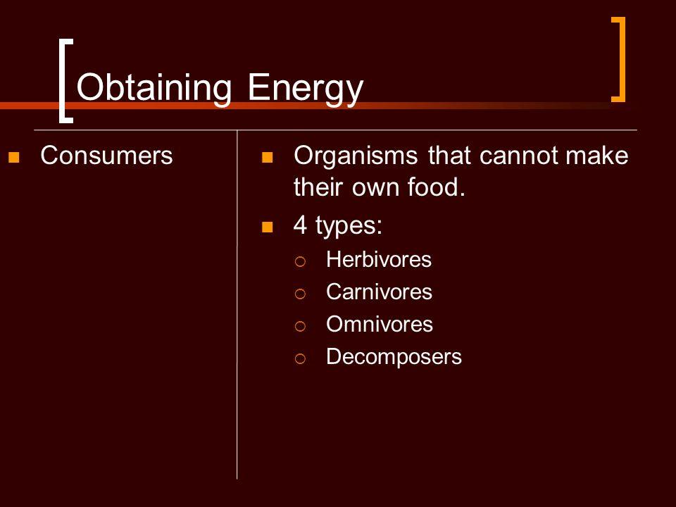 Obtaining Energy Consumers Herbivores Eat producers (vegetarians)