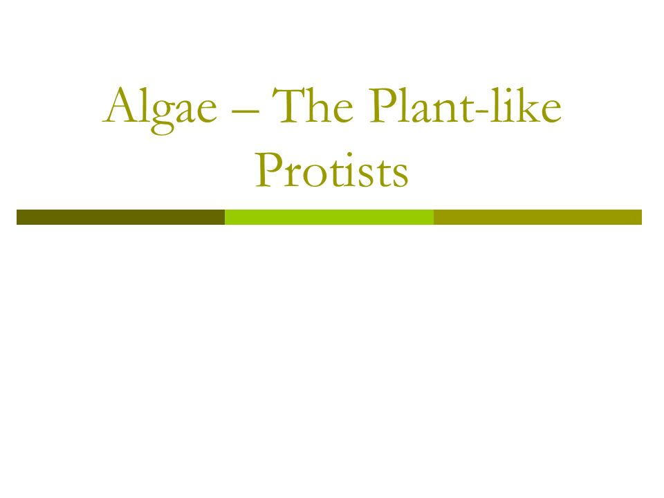 Plant-like Protists Contain chlorophyll located in chloroplasts.