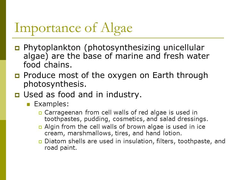 Importance of Algae Phytoplankton (photosynthesizing unicellular algae) are the base of marine and fresh water food chains. Produce most of the oxygen