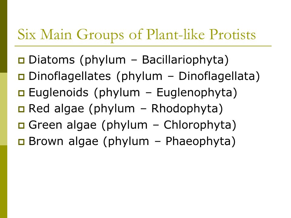 Six Main Groups of Plant-like Protists Diatoms (phylum – Bacillariophyta) Dinoflagellates (phylum – Dinoflagellata) Euglenoids (phylum – Euglenophyta)