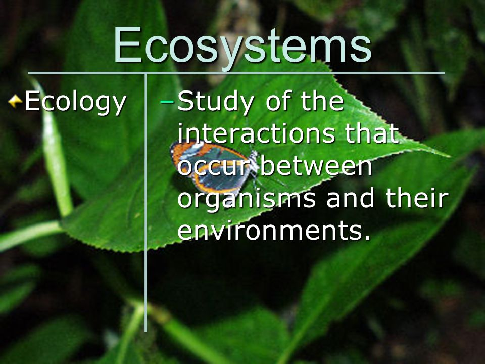 Ecosystems Ecology –Study of the interactions that occur between organisms and their environments.