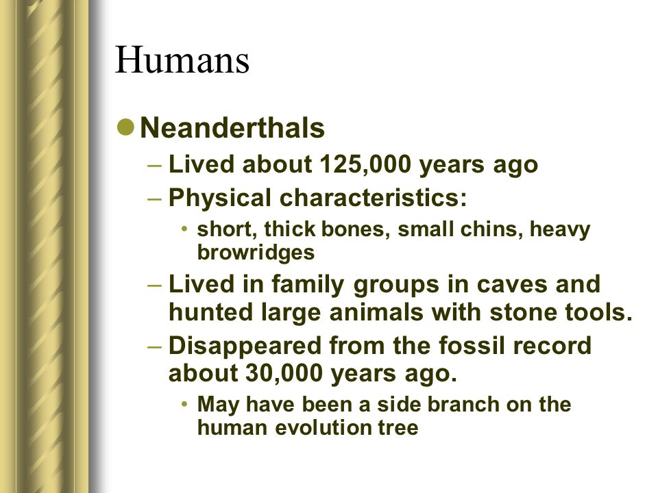 Humans Neanderthals –Lived about 125,000 years ago –Physical characteristics: short, thick bones, small chins, heavy browridges –Lived in family group