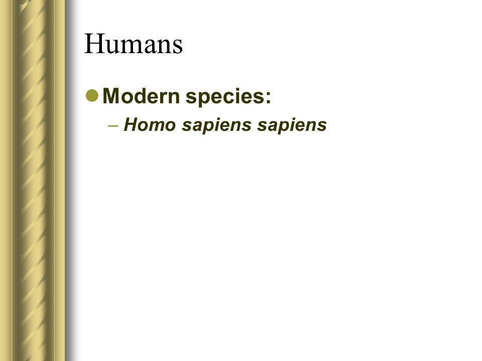 Humans Modern species: –Homo sapiens sapiens