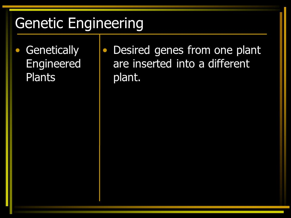 Genetic Engineering Genetically Engineered Plants Desired genes from one plant are inserted into a different plant.