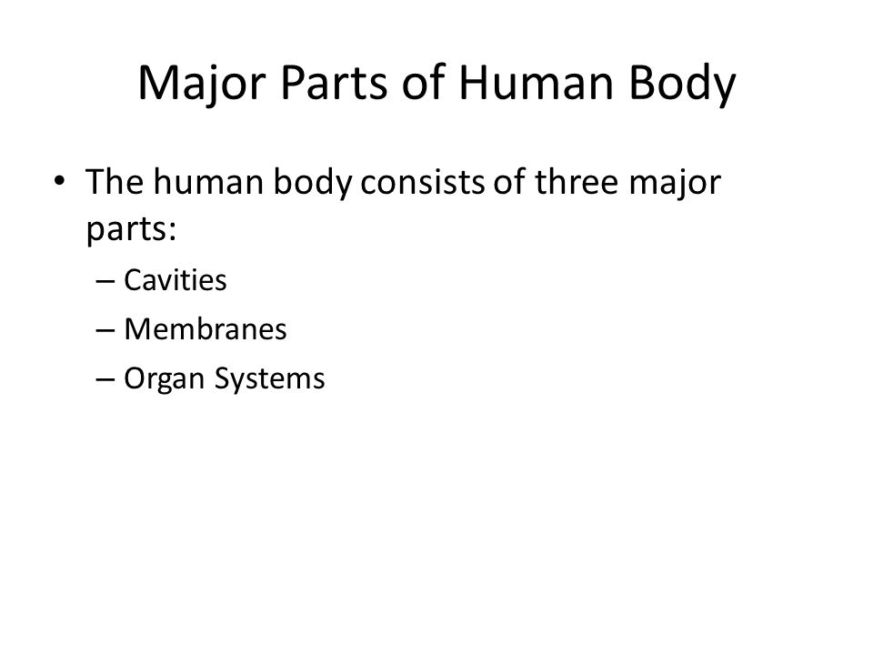 Major Divisions of the Human Body The human body can be separated into: – Axial portion Includes the head, neck, and trunk – Appendicular portion Includes the upper and lower limbs