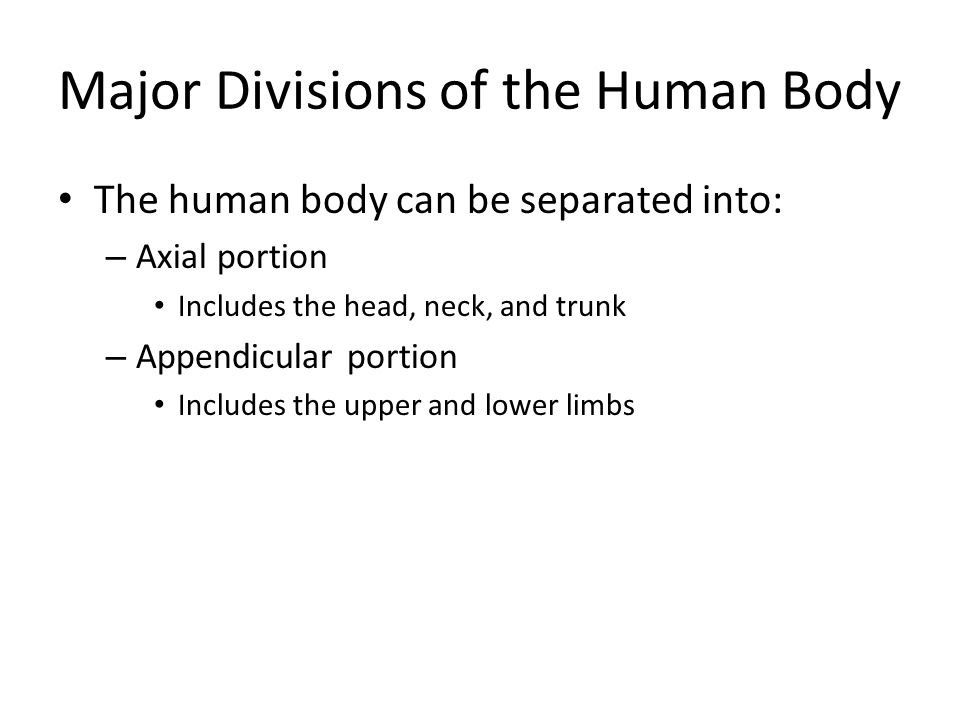 Major Divisions of the Human Body The human body can be separated into: – Axial portion Includes the head, neck, and trunk – Appendicular portion Incl