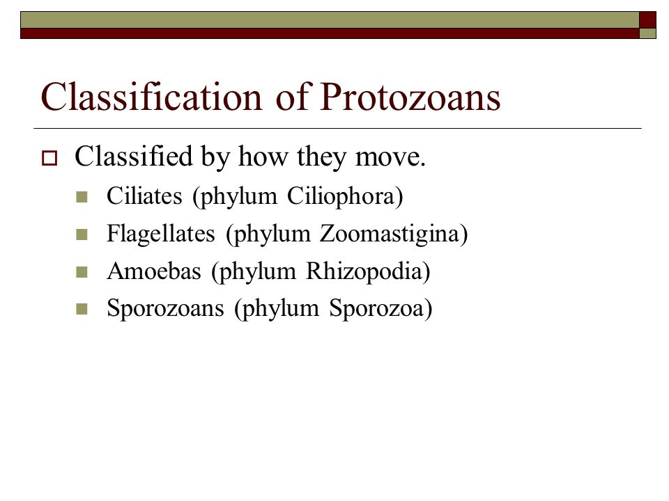 Classification of Protozoans Classified by how they move. Ciliates (phylum Ciliophora) Flagellates (phylum Zoomastigina) Amoebas (phylum Rhizopodia) S