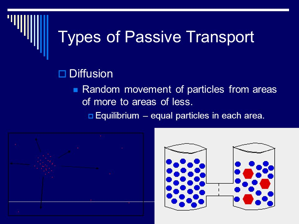 Types of Passive Transport Diffusion Random movement of particles from areas of more to areas of less. Equilibrium – equal particles in each area.