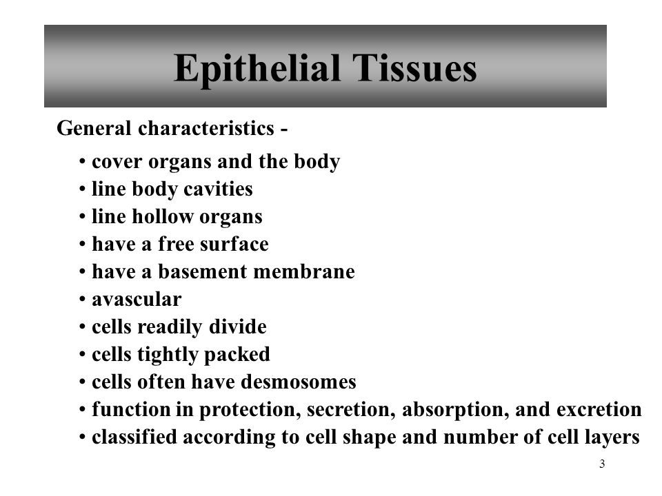 3 Epithelial Tissues General characteristics - cover organs and the body line body cavities line hollow organs have a free surface have a basement mem