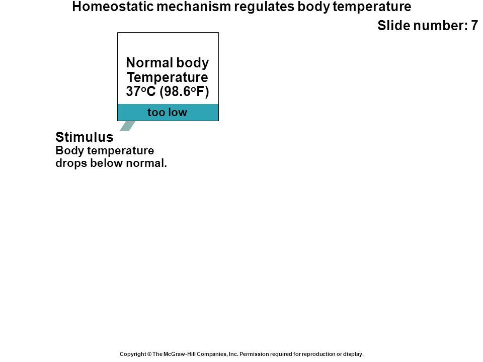 too low Normal body Temperature 37 o C (98.6 o F) Homeostatic mechanism regulates body temperature Slide number: 7 Copyright © The McGraw-Hill Compani
