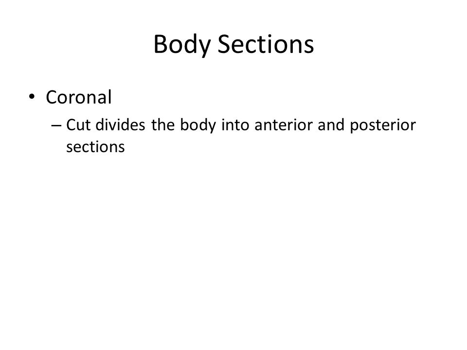 Body Sections Coronal – Cut divides the body into anterior and posterior sections