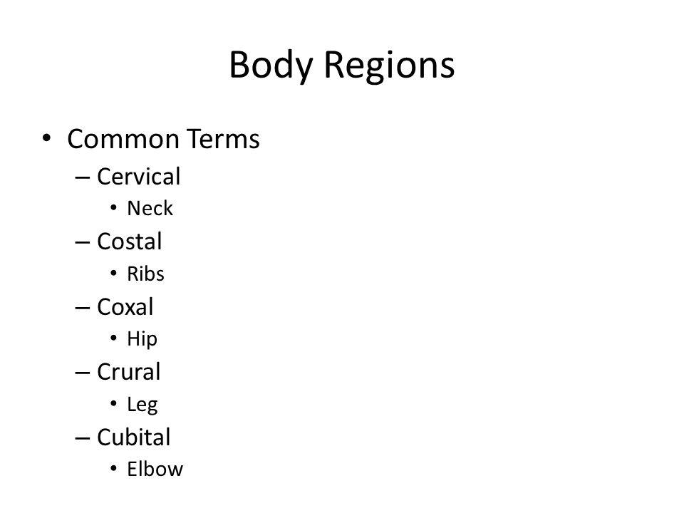 Body Regions Common Terms – Cervical Neck – Costal Ribs – Coxal Hip – Crural Leg – Cubital Elbow