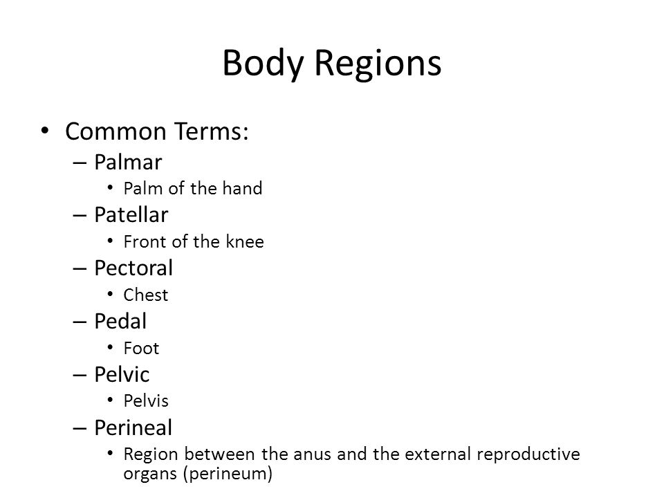 Body Regions Common Terms: – Palmar Palm of the hand – Patellar Front of the knee – Pectoral Chest – Pedal Foot – Pelvic Pelvis – Perineal Region betw