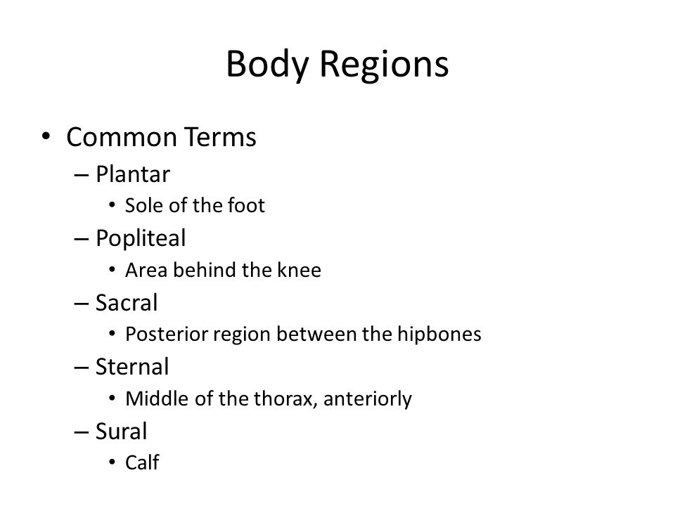 Body Regions Common Terms – Plantar Sole of the foot – Popliteal Area behind the knee – Sacral Posterior region between the hipbones – Sternal Middle