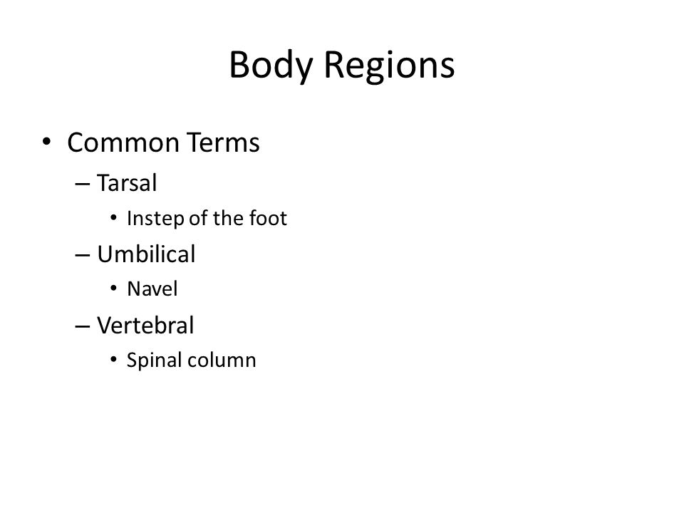 Body Regions Common Terms – Tarsal Instep of the foot – Umbilical Navel – Vertebral Spinal column