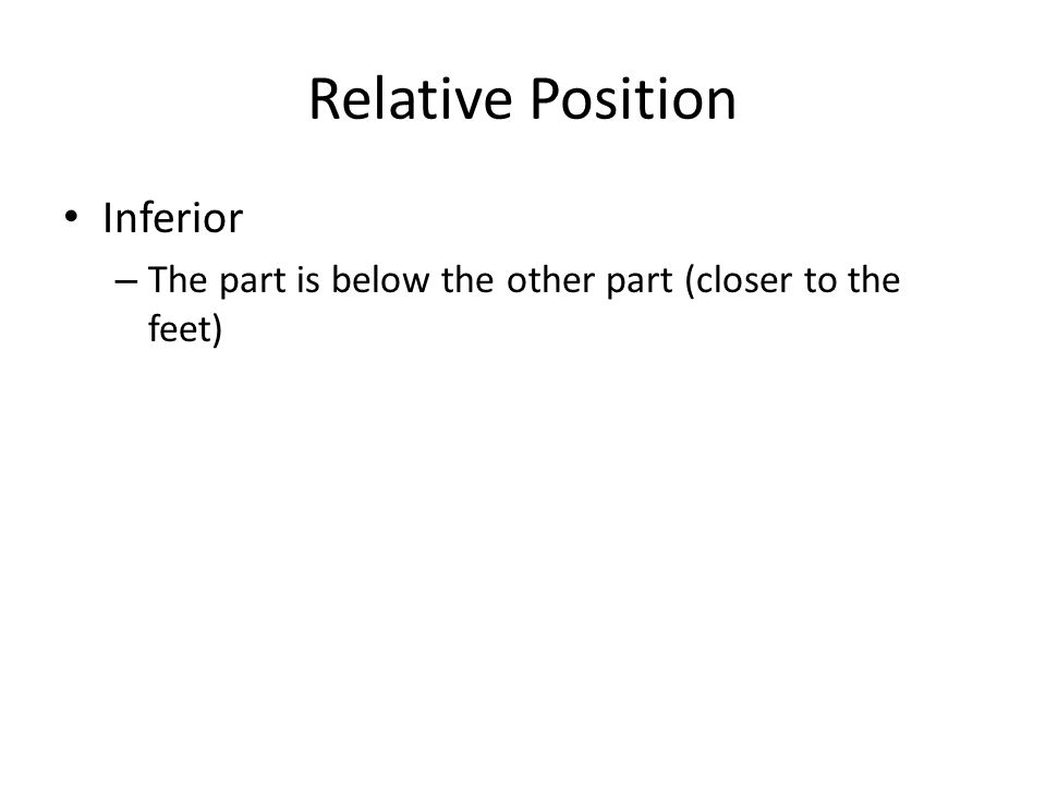 Relative Position Inferior – The part is below the other part (closer to the feet)