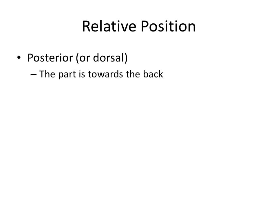 Relative Position Medial – The part is closer to the mid-line of the body than the other part