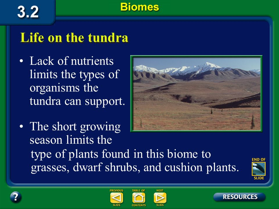Section 3.2 Summary – pages 70-83 Life on the tundra Because of its latitude, temperatures in the tundra never rise above freezing for long, and only