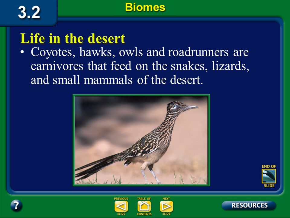 Section 3.2 Summary – pages 70-83 The leaves of some desert plants curl up, or even drop off altogether, thus reducing water loss during extremely dry